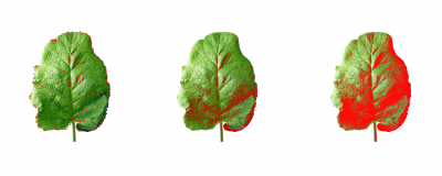 Leaf++