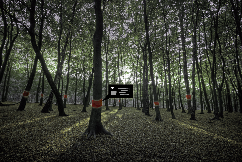augmented woods